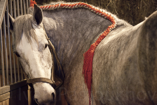01 horses-3