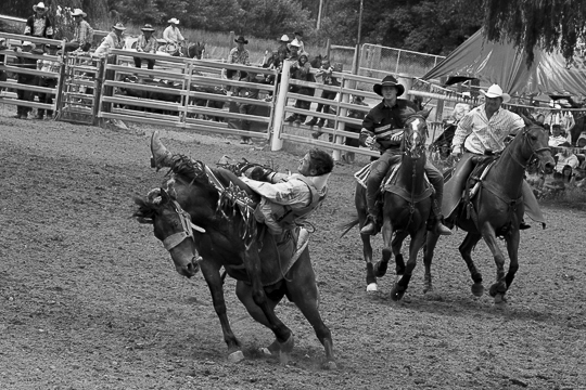 16 horses-5