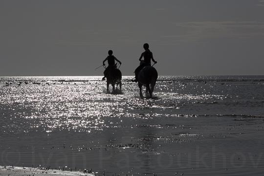 horses-9 15.33.40