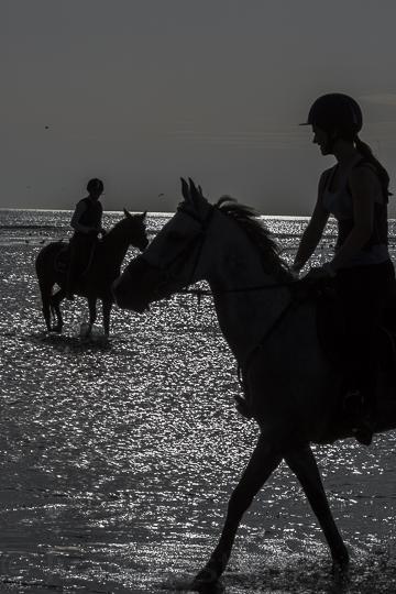 horses - copie