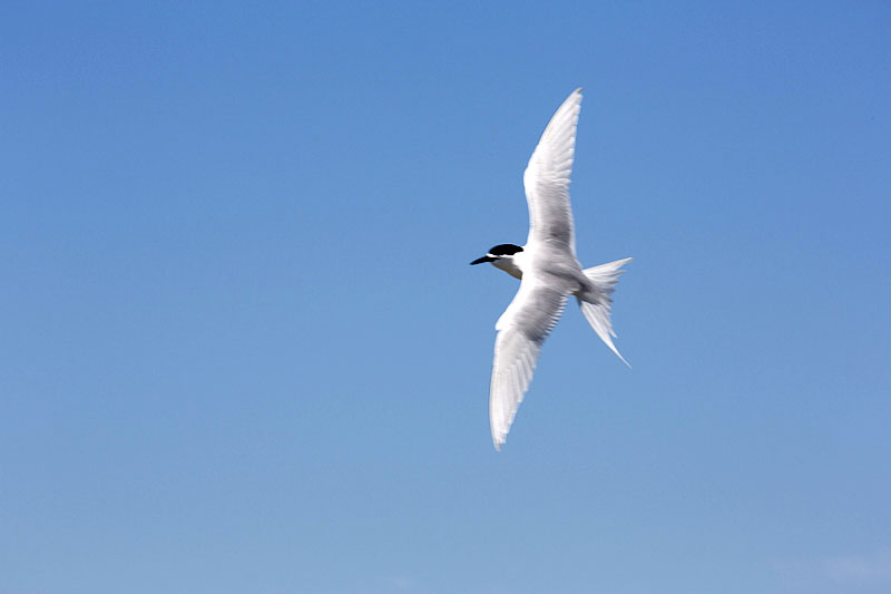 birds NZ-7