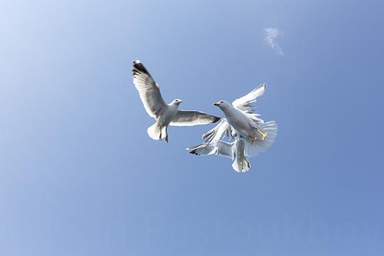 L'oiseau1