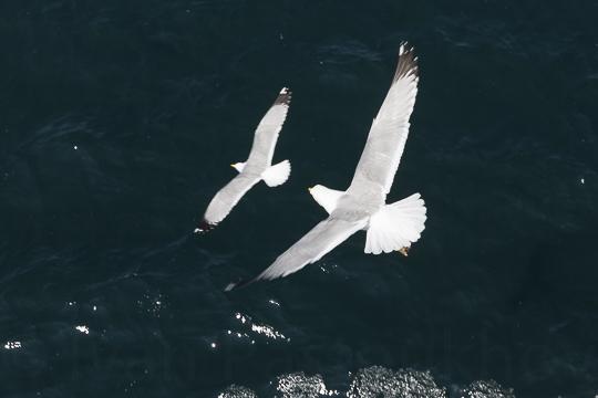 L'oiseau2